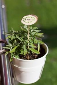 Balcony Herbs: Sage